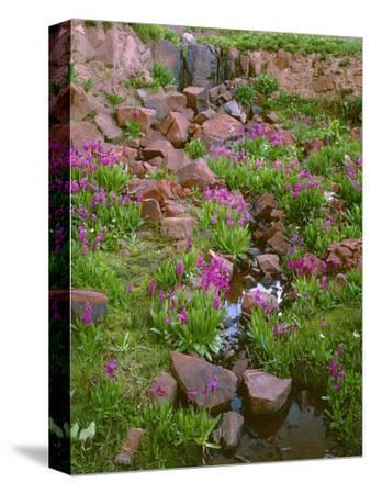 Colorado, San Juan National Forest-John Barger-Stretched Canvas Print