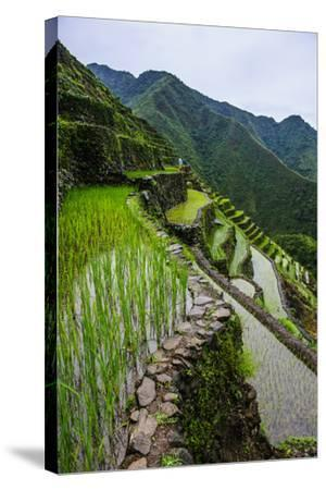 Batad Rice Terraces, World Heritage Site, Banaue, Luzon, Philippines-Michael Runkel-Stretched Canvas Print