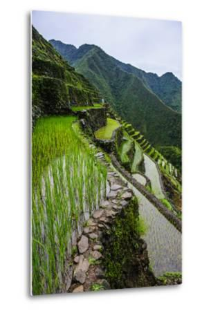 Batad Rice Terraces, World Heritage Site, Banaue, Luzon, Philippines-Michael Runkel-Metal Print
