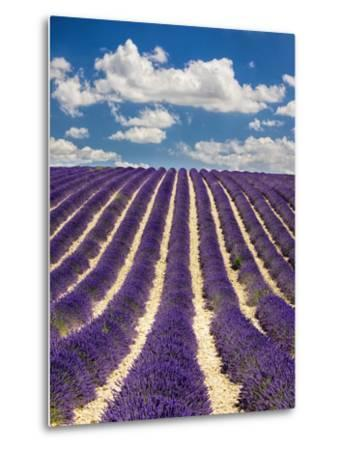 France, Provence, Lavender Field on the Valensole Plateau-Terry Eggers-Metal Print