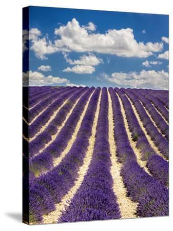 France, Provence, Lavender Field on the Valensole Plateau-Terry Eggers-Stretched Canvas Print