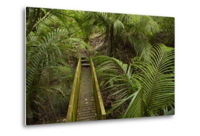 Nikau Palms and Footbridge at Parry Kauri Park, Warkworth, Auckland Region, North Island-David Wall-Metal Print