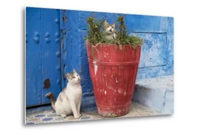 Morocco, Rabat, Sale, Kasbah Des Oudaias, Cats Hanging Out by a Potted Plant-Emily Wilson-Metal Print