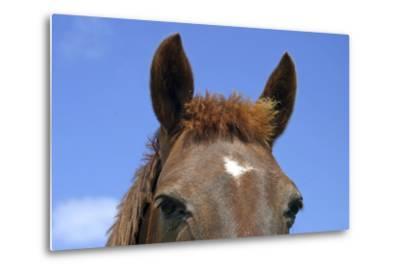 Ireland. Close-Up of Horse Face-Kymri Wilt-Metal Print
