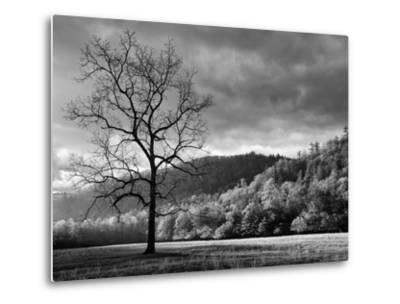 North Carolina, Great Smoky Mountains National Park, Storm Clearing at Dawn in Cataloochee Valley-Ann Collins-Metal Print