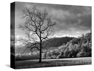 North Carolina, Great Smoky Mountains National Park, Storm Clearing at Dawn in Cataloochee Valley-Ann Collins-Stretched Canvas Print