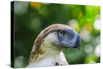 Philippine Eagle, Davao, Mindanao, Philippines-Michael Runkel-Stretched Canvas Print