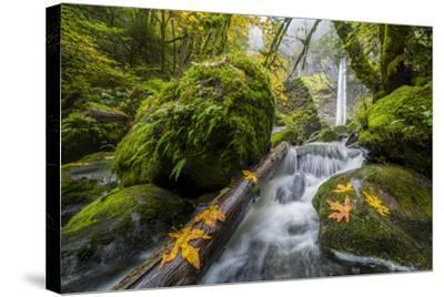 USA, Oregon. View from Below Elowah Falls on Mccord Creek in Autumn in the Columbia Gorge-Gary Luhm-Stretched Canvas Print