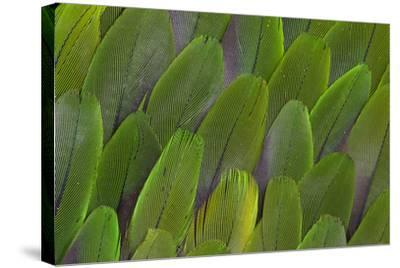 Green Wing Feathers of a Parrot-Darrell Gulin-Stretched Canvas Print