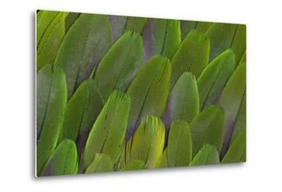 Green Wing Feathers of a Parrot-Darrell Gulin-Metal Print