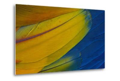 Scarlet Macaw Wing Covert Feathers-Darrell Gulin-Metal Print