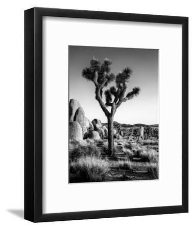 USA, California, Joshua Tree National Park at Hidden Valley-Ann Collins-Framed Premium Photographic Print