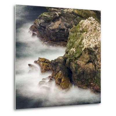 Shetland Islands, Hermaness National Nature Reserve on the Island Unst. Colony of Northern Gannet-Martin Zwick-Metal Print