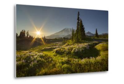 Starburst Setting Sun, Subalpine Wildflowers and Mt. Rainier at Mazama Ridge, Paradise Area-Gary Luhm-Metal Print