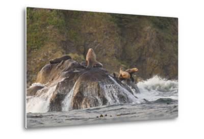 Stellar Sea Lions and Crashing Waves at Flattery Rocks on the Olympic Coast-Gary Luhm-Metal Print
