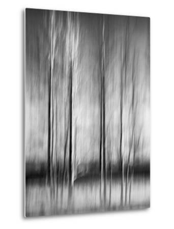 USA, California, Lake Tahoe, Abstract of Bare Aspen Trees and Snow at Carnelian Bay-Ann Collins-Metal Print