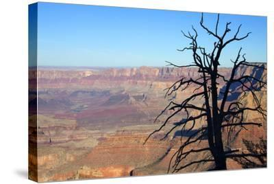 USA, Arizona, Grand Canyon. the Grand Canyon, View from the South Rim-Kymri Wilt-Stretched Canvas Print