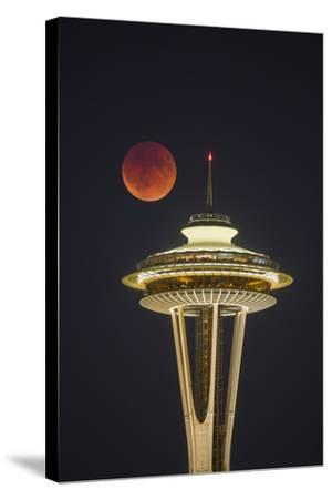 Two Image Composite to Account for Brightness of the Needle-Gary Luhm-Stretched Canvas Print