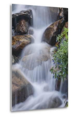 USA, Colorado, Clear Creek County. Close-Up of Cascade and Chiming Bells Flowers-Jaynes Gallery-Metal Print