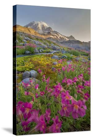 Washington, Lewis's Monkeyflower Along Panorama Trail and Paradise River, Mt. Rainier National Park-Gary Luhm-Stretched Canvas Print
