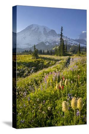 Washington, Subalpine Pasque Flower, Paintbrush and Lupine Wildflowers and Mt. Rainier-Gary Luhm-Stretched Canvas Print