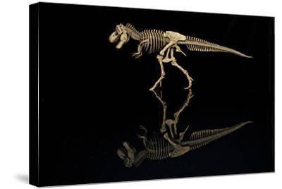 USA, Tennessee. T-Rex Skeleton Replica Reflection-Jaynes Gallery-Stretched Canvas Print