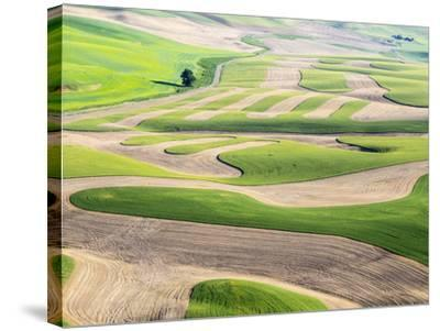 Washington, Whitman County. Aerial Photography in the Palouse Region of Eastern Washington-Julie Eggers-Stretched Canvas Print