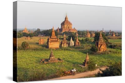 Traditional Horse and Cart Passing the Pagodas in Bagan (Pagan), Myanmar (Burma), Asia-Jordan Banks-Stretched Canvas Print
