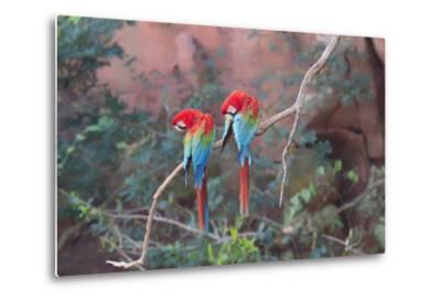 Red-And-Green Macaws (Ara Chloropterus) Perched on a Branch in Buraco Das Araras, Brazil-G&M Therin-Weise-Metal Print