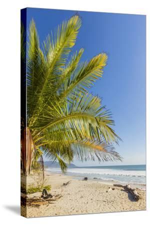 Palm Trees on This Beautiful Surf Beach Near Mal Pais, Santa Teresa, Costa Rica-Rob Francis-Stretched Canvas Print
