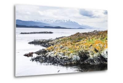 Cormorant Colony on an Island at Ushuaia in the Beagle Channel (Beagle Strait), Argentina-Matthew Williams-Ellis-Metal Print