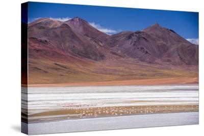Flamingos at Laguna Hedionda, a Salt Lake Area in the Altiplano of Bolivia, South America-Matthew Williams-Ellis-Stretched Canvas Print