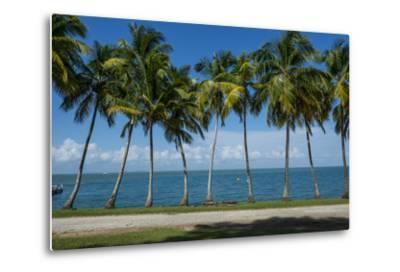 Palm Tree Line, Royal Island, Iles Du Salut, Devils Island, French Guiana, Department of France-Michael Runkel-Metal Print