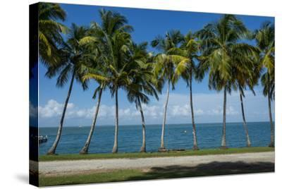 Palm Tree Line, Royal Island, Iles Du Salut, Devils Island, French Guiana, Department of France-Michael Runkel-Stretched Canvas Print