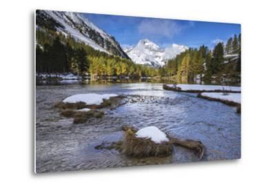 Colorful Trees and Snowy Peaks Frame Lai Da Palpuogna, Bergen, Canton of Graubunden-Roberto Moiola-Metal Print