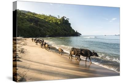 Water Buffalo on the Beach at Sungai Pinang, Near Padang in West Sumatra, Indonesia, Southeast Asia-Matthew Williams-Ellis-Stretched Canvas Print