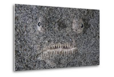 A Stargazer Fish Camouflages Itself in the Sand-Stocktrek Images-Metal Print