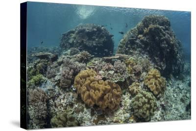 A Beautiful Coral Reef Thrives in Komodo National Park, Indonesia-Stocktrek Images-Stretched Canvas Print