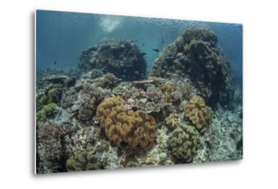 A Beautiful Coral Reef Thrives in Komodo National Park, Indonesia-Stocktrek Images-Metal Print