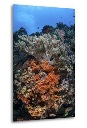 Soft Corals and Other Invertebrates Grow on a Reef in Indonesia-Stocktrek Images-Metal Print