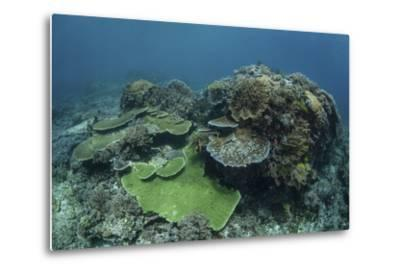 A Healthy Coral Reef Thrives in Komodo National Park, Indonesia-Stocktrek Images-Metal Print