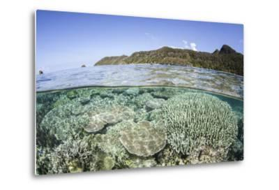 A Beautiful Coral Reef in Raja Ampat, Indonesia-Stocktrek Images-Metal Print