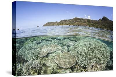 A Beautiful Coral Reef in Raja Ampat, Indonesia-Stocktrek Images-Stretched Canvas Print
