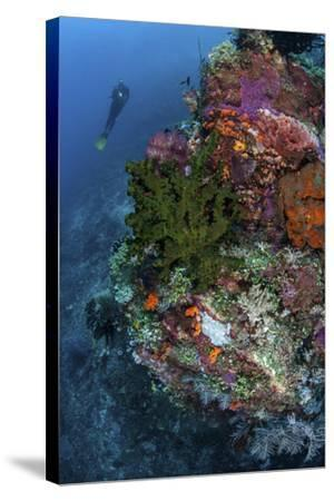 A Diver Hovers Above a Colorful Coral Reef-Stocktrek Images-Stretched Canvas Print