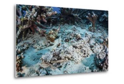 A Crocodilefish Lays on the Seafloor Near an Artificial Reef-Stocktrek Images-Metal Print