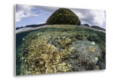 Reef-Building Corals Grow Inside Palau's Lagoon-Stocktrek Images-Metal Print