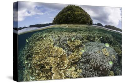 Reef-Building Corals Grow Inside Palau's Lagoon-Stocktrek Images-Stretched Canvas Print