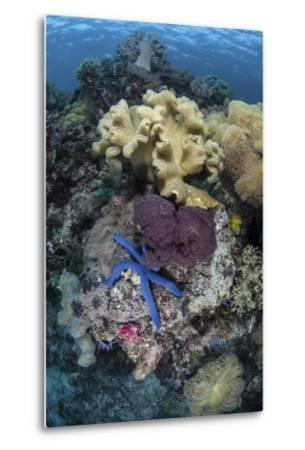 A Diverse Array of Invertebrates Cover a Reef in Indonesia-Stocktrek Images-Metal Print