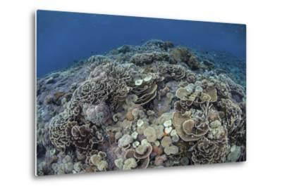 Corals Compete for Space to Grow on a Reef in Indonesia-Stocktrek Images-Metal Print