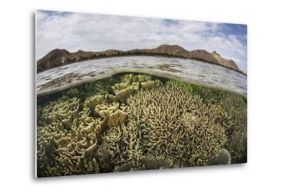 Fragile Corals Grow in Shallow Water in Komodo National Park-Stocktrek Images-Metal Print